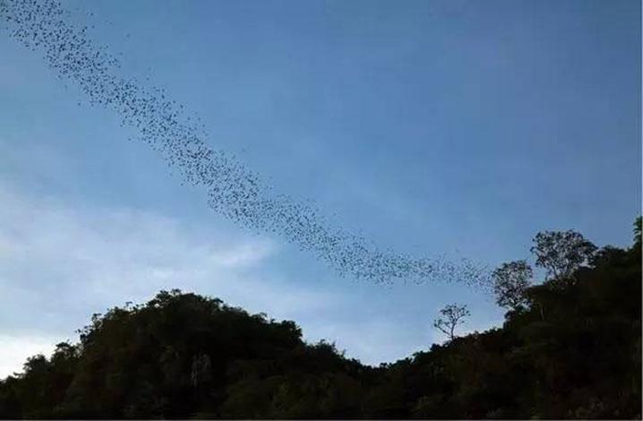 叻丕府 蝙蝠