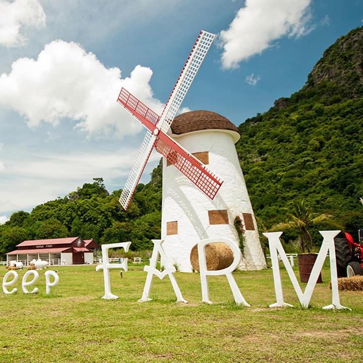 零距离接触华欣Swiss Sheep Farm