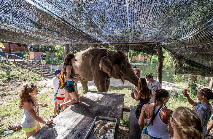 北碧大象世界