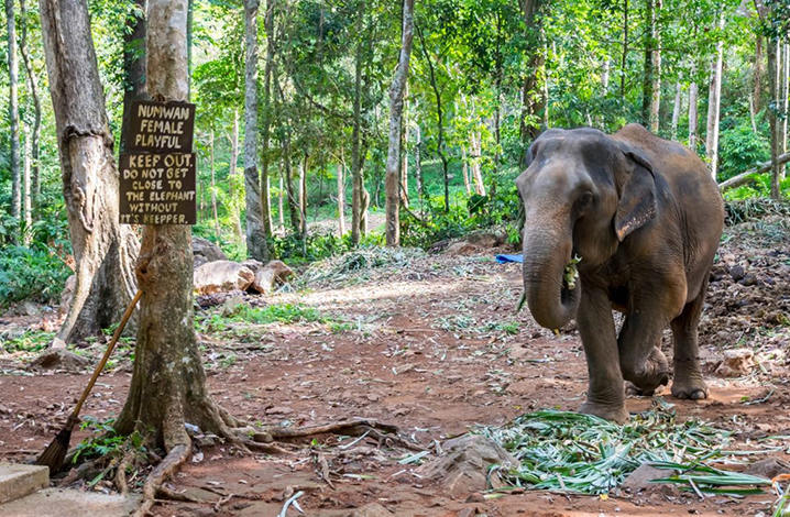 象岛Ban Kwan大象营