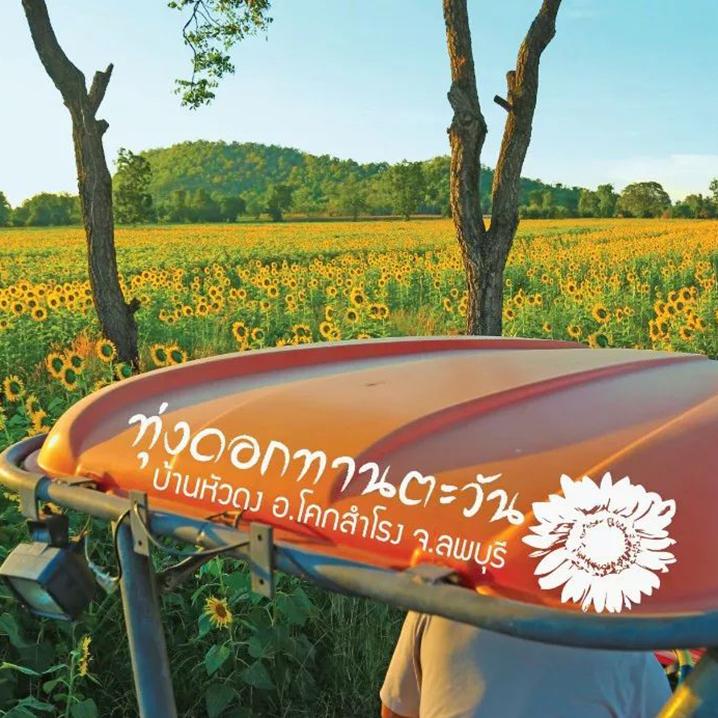 红莲湖、向日葵海游记,冬季最美的旅行打开方式!