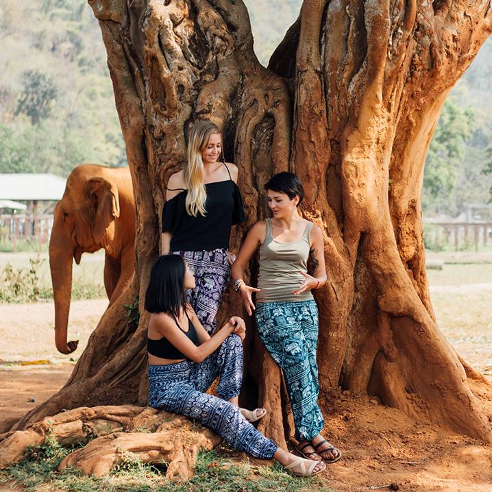 泰国清迈大象保护公园(Elephant Nature Park)
