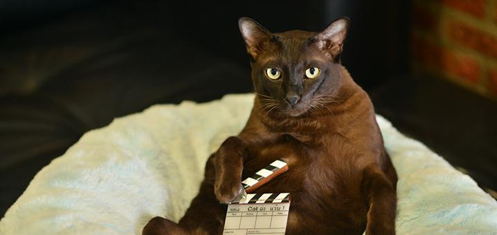 泰国电影《擅离职守的猫咪》,披着宠物外衣的纯爱电影
