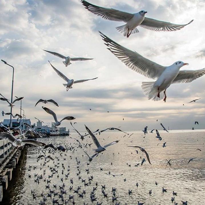 邦浦海滨,欣赏海鸟感受别致悠闲的慢生活
