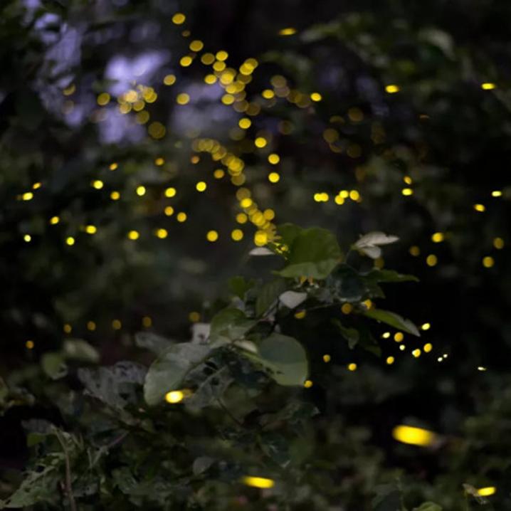 曼谷安帕瓦水上市场,是泰国最美的萤火虫森林