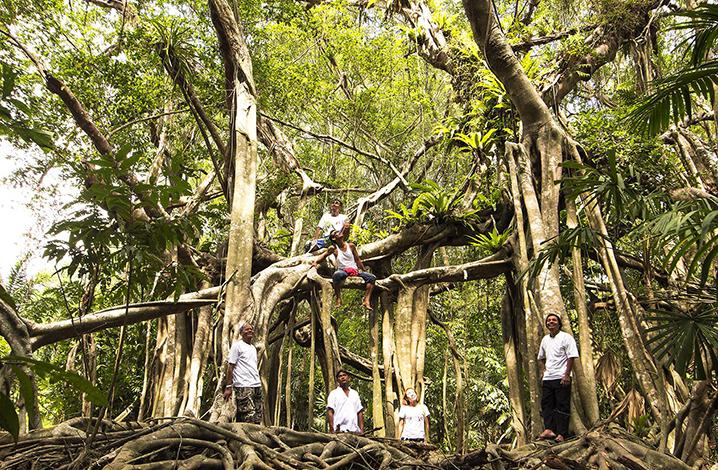 泰国十大古老的巨树