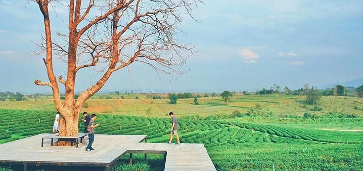 我赌五毛99%的泰国网红都来这些清莱景点拍过照!
