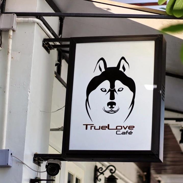 曼谷True Love Cafe咖啡店,一波二哈在曼谷等你
