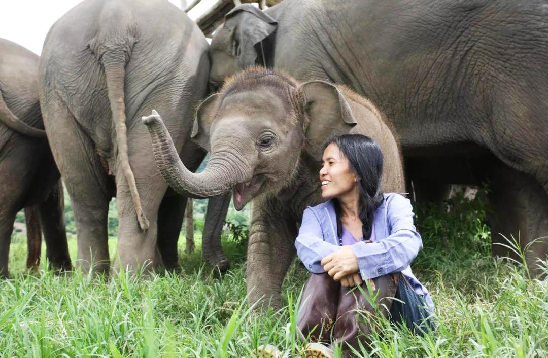 普吉岛大象救助营
