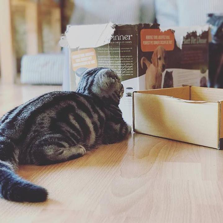 清迈市区哪些咖啡厅有猫可撸