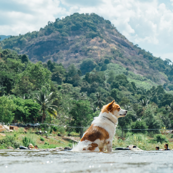 泰游趣泰国旅游攻略