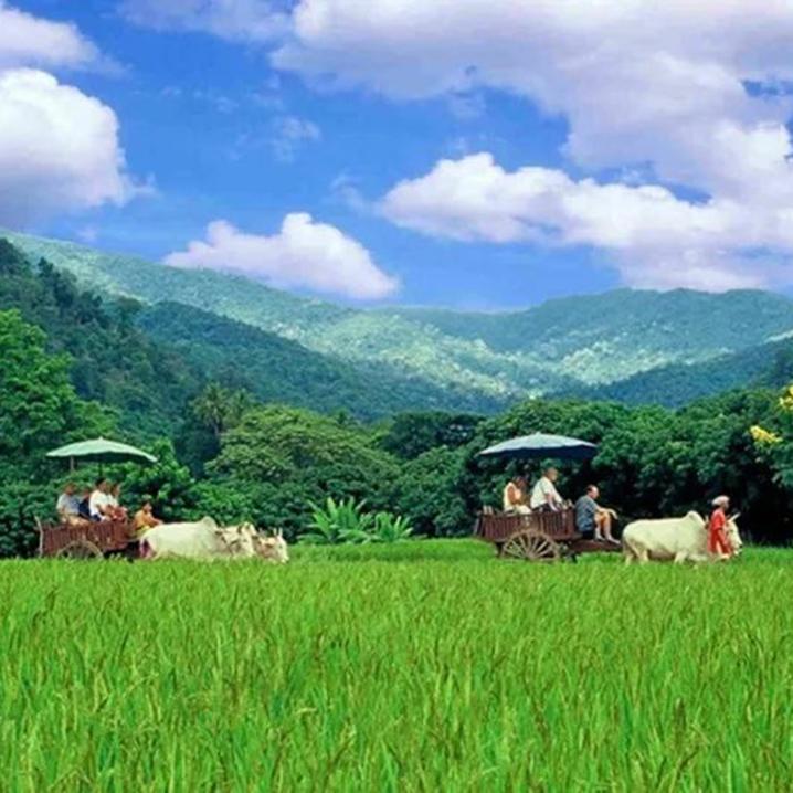 泰国出名的椰子王国——安帕瓦椰林埠