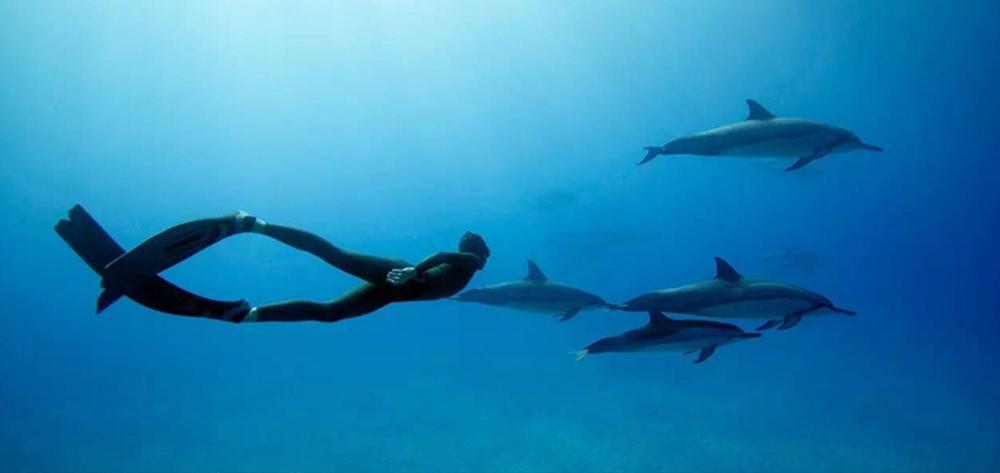 普吉岛游记 | 包括行程安排、景点、美食、AIDA自由潜水......