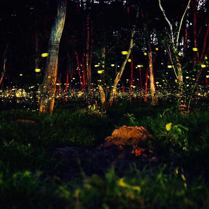 泰国观赏萤火虫的五个绝佳胜地
