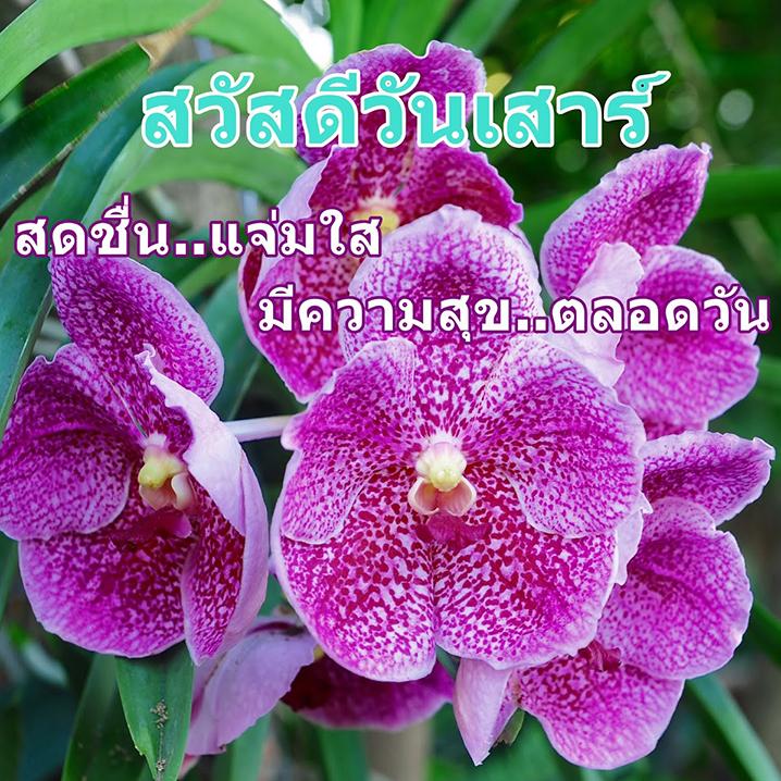泰国的颜色文化,色寻泰国,或许这是了解她的捷径