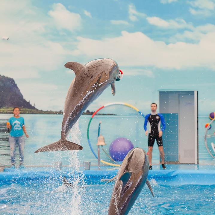 普吉岛尼莫海豚馆(Dolphins Bay Phuket)