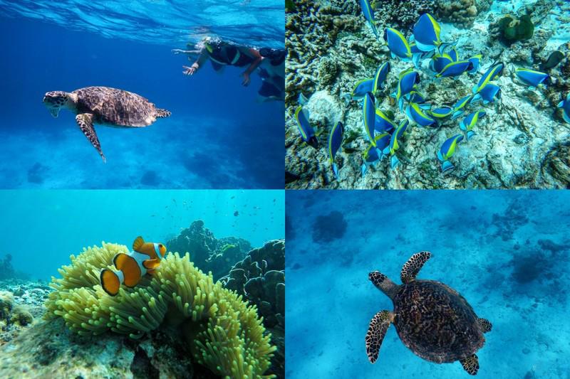 普吉岛斯米兰潜水一日游