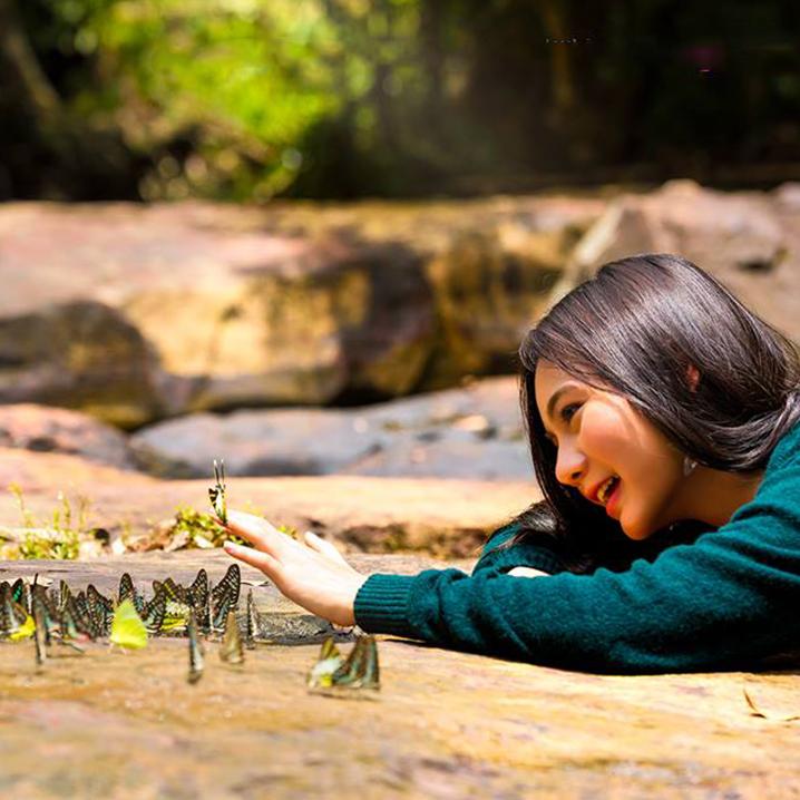 沙缴府Pang Sida国家公园,看五颜六色的蝴蝶翩翩起舞