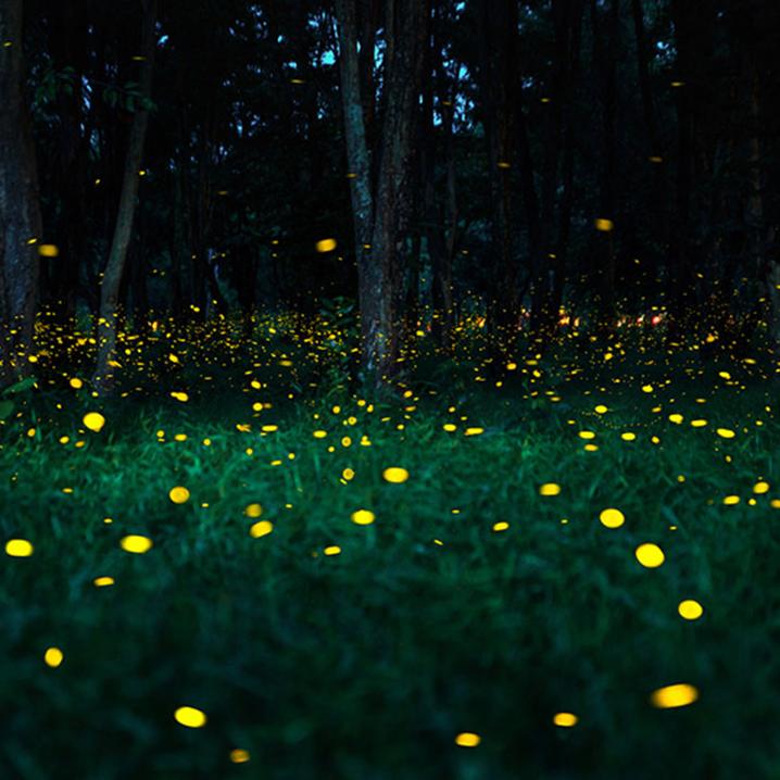 巴真武里府Khai Promyoti丛林,夏日晚风里赴一场萤火虫之梦