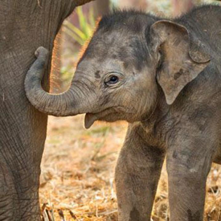 普吉岛五大大象保护营|拒绝骑象,带着孩子去大象保护营玩