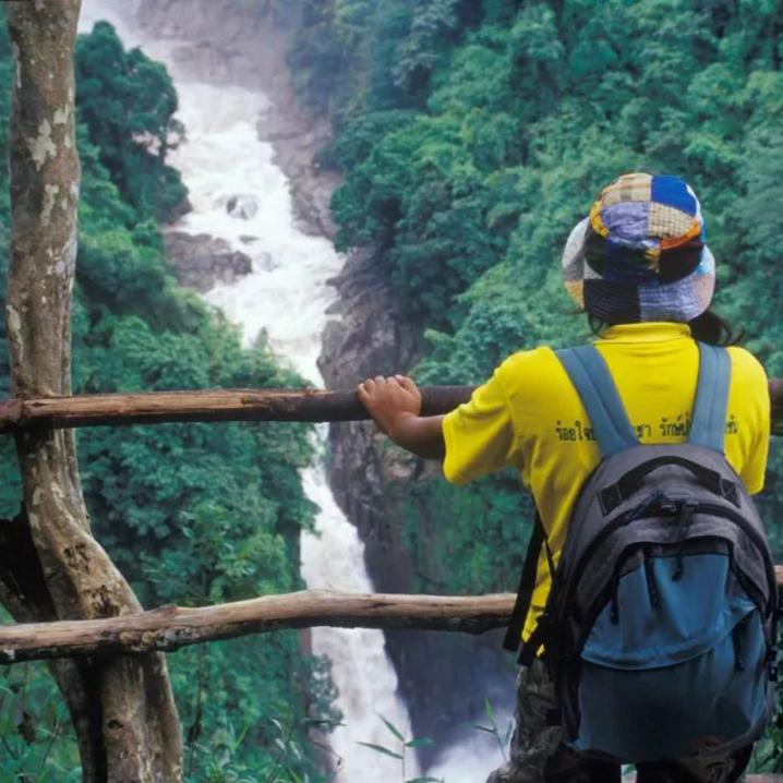 夏天最超酷的避暑方式,来泰国山里看花看鸟看动物