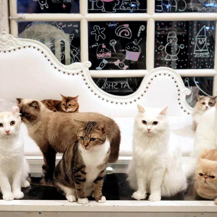 曼谷猫咪咖啡馆推荐,大型撸猫现场