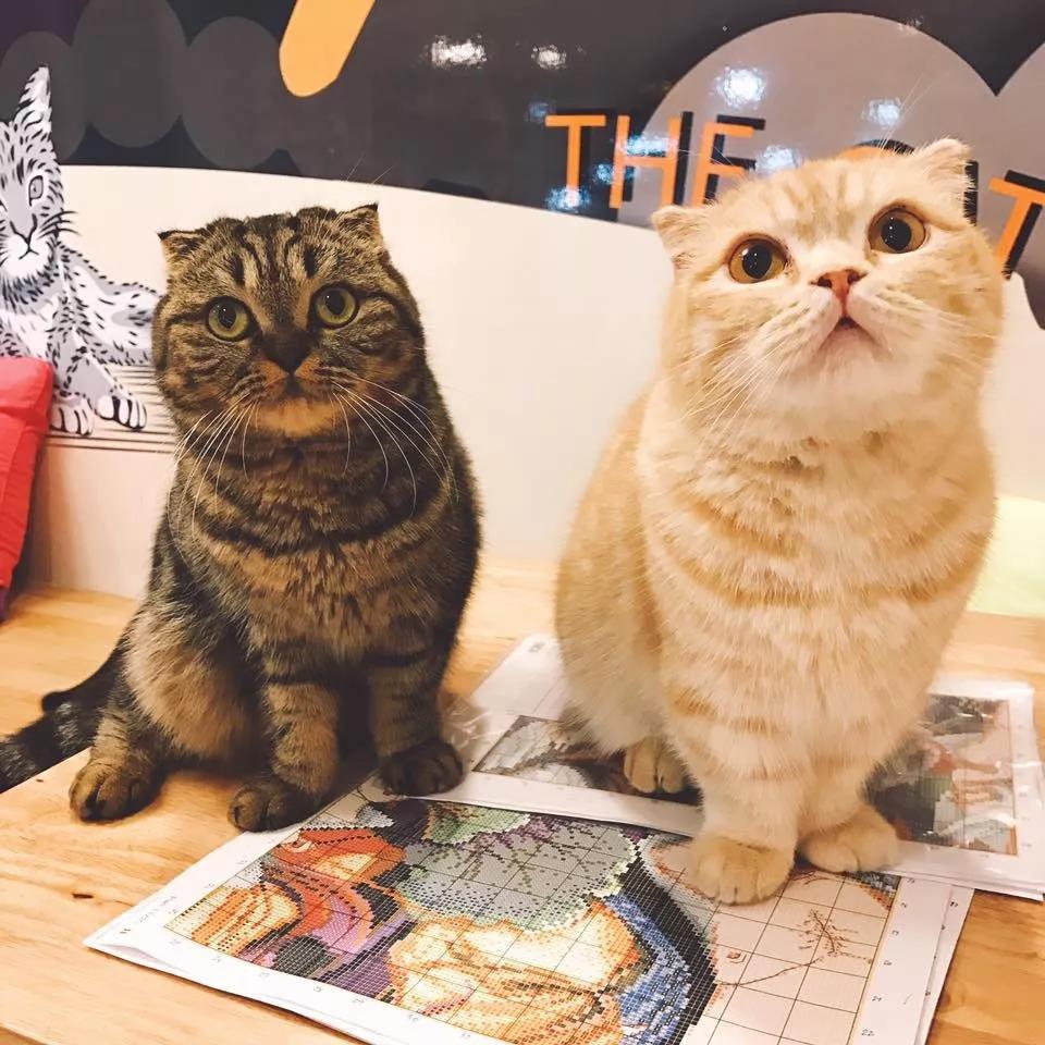 """清迈猫咪主题咖啡厅,零距离接触""""喵星人"""