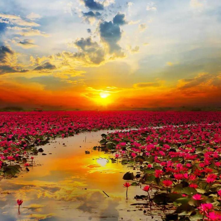 您有一份《泰国全年赏花指南》待查收