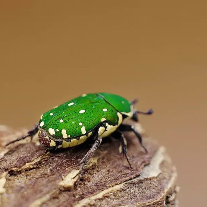 清迈小朋友最爱去的昆虫博物馆SIAM INSECT ZOO
